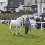 Clifden Connemara Pony Show